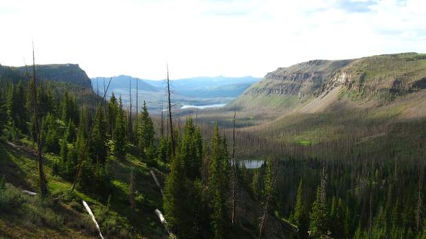 A view within the Flat Tops Wilderness.