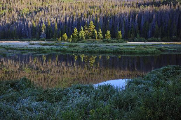 Trees near Boulder Lake in the Eagles Nest Wilderness near Silverthorne.