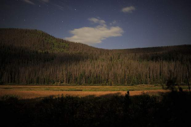 Trees near Boulder Lake in the Eagle Nest Wilderness Friday, Sept. 1, near Silverthorne.