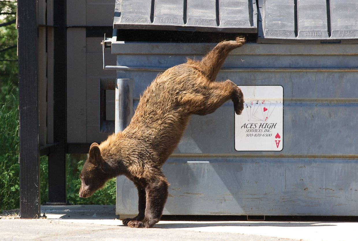Human-bear conflicts a concern as bears pack on weight for winter