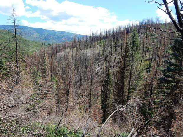 Aspen Skiing Co. plans to offset cutting trees for Pandora's expansion with help in Lake Christine Fire burn scar