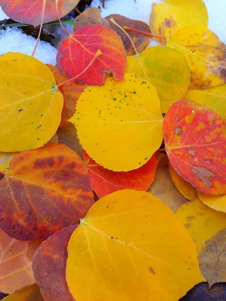 Curious Nature: Where do leaves go after they fall from the trees?